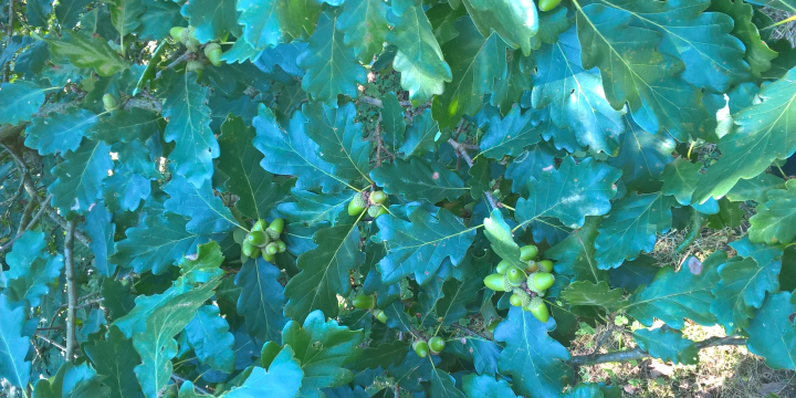 Erdőművelés: az erdő nevelése, gondozása